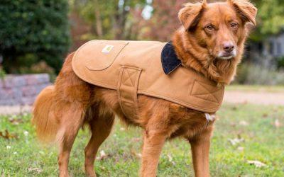 Carhartt Chore Dog Coat