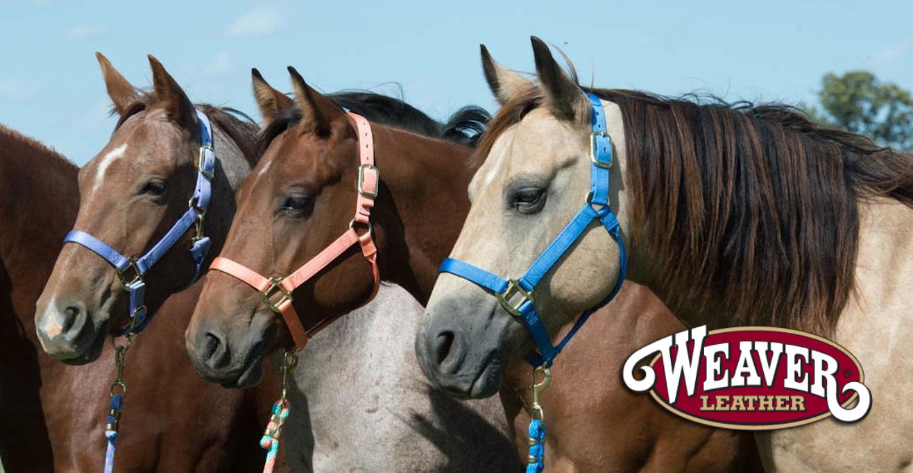 Western Boots and Clothing, Horse Tack, Animal Feed | Spruce Capital